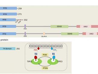 Sima Lev _ PI Transfer Proteins